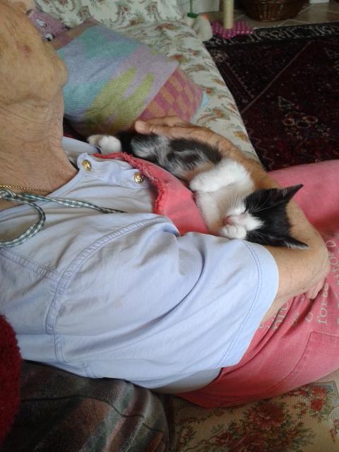 Festa dei nonni: La nonna che non voleva un gatto